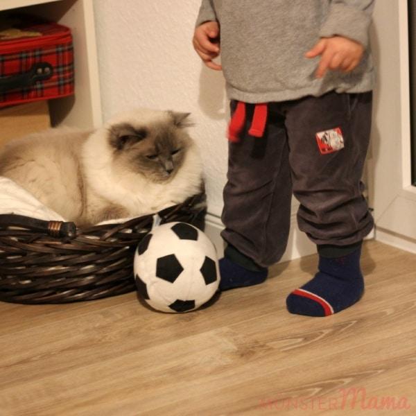 Fußballkatze