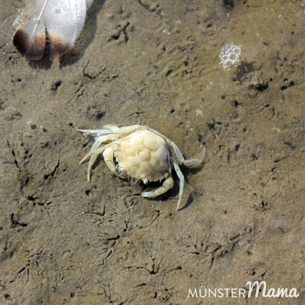 Cuxhaven_Meereswesen