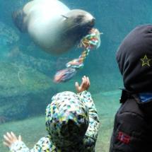 ZooAmMeer-Bremerhaven-Bremen-Dangast-Varel-mit-Kindern-Familie-Ausflug-Urlaub-Winter-Sommer-Ferien-Freizeit