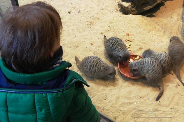 Allwetterzoo Münster Familienausflug Eltern Kinder Großeltern Ausflugstipp Reiseblog Attraktion Freizeitpark Erdmännchen Herde Tiere