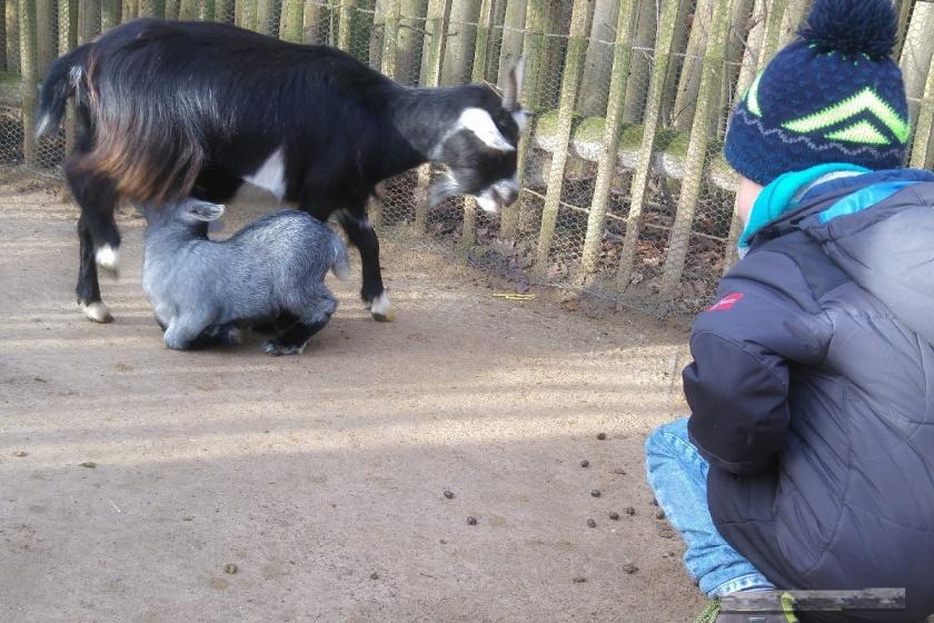Allwetterzoo Münster Familienausflug Eltern Kinder Großeltern Ausflugstipp Reiseblog Attraktion Freizeitpark Streichelzoo Ziegen Schafe