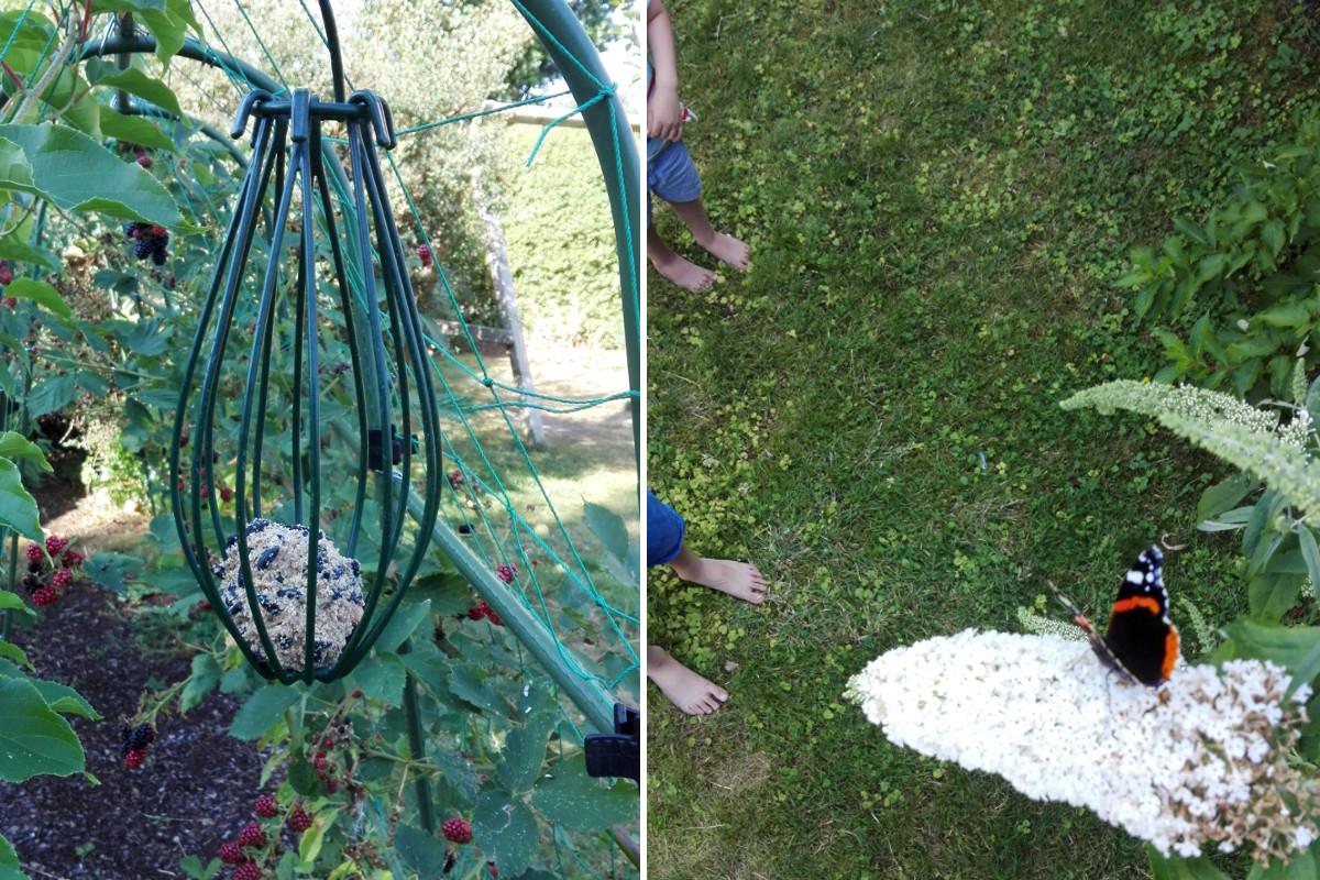 Schmetterling Garten Familiengarten Kinder Familienleben Singvögel beobachten Heimische Natur