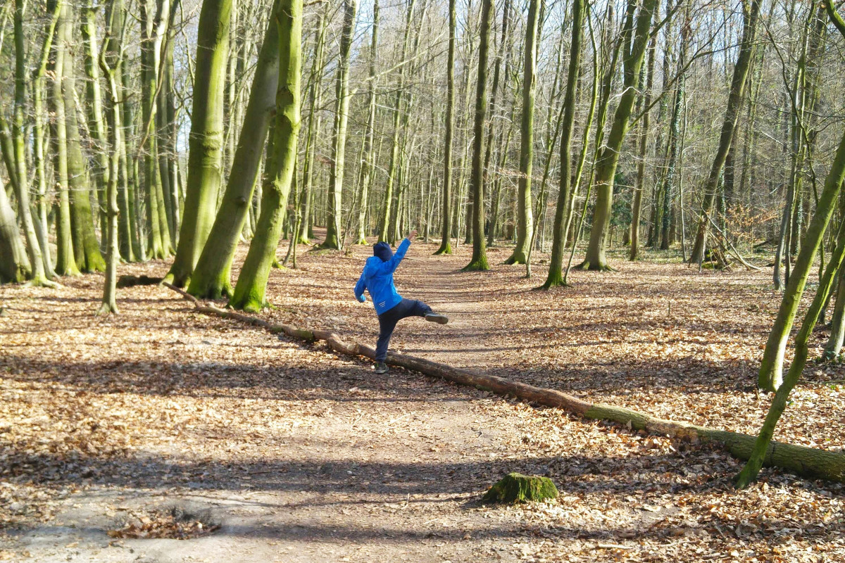 Wald-Herbst-Winter-Münster-Tiergarten-Singvögel beobachten