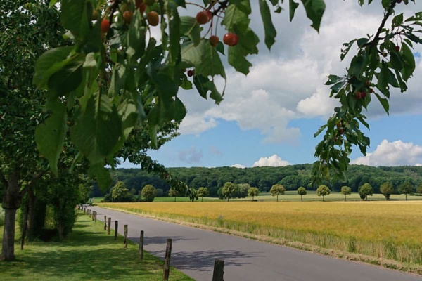 Münsterland Baumberge Stift Tilbeck goldene Felder und Baumalleen