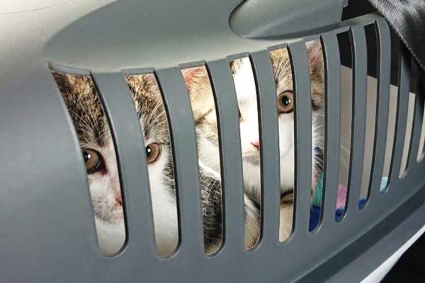 Adoptierte Kitten auf dem Weg nach Münster Tierschutz Familie