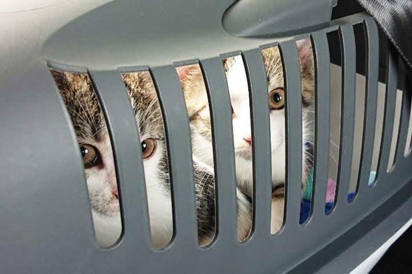 adoptierte Kitten auf dem Weg nach Münster im Transportkorb
