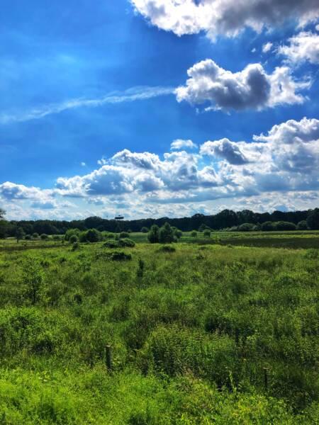 Mit der Leeze von Wuppertal nach Münster: Ein Storch im Hervester Bruch